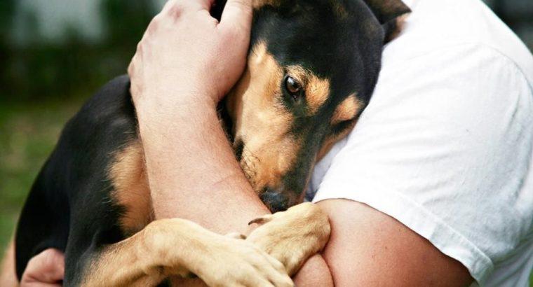 Хозяева домашних животных теперь «под законом»